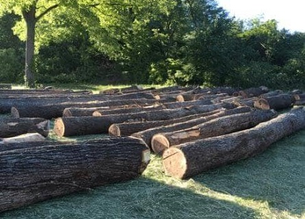 tree logs laying down in the grass in rows for Loggers Morgan County IL