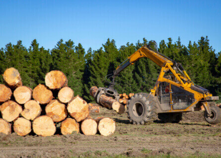 skidder stacking logs outside on the ground