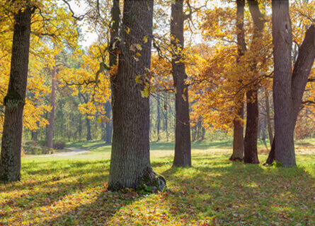 trees during the fall with orange and yellow leaves for Loggers Adams County IL