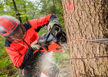 Man using chainsaw to cut down a tree in the woods
