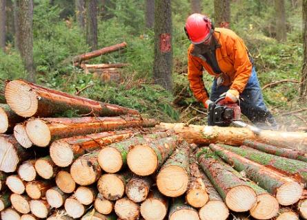 Logging Companies Knox County IL
