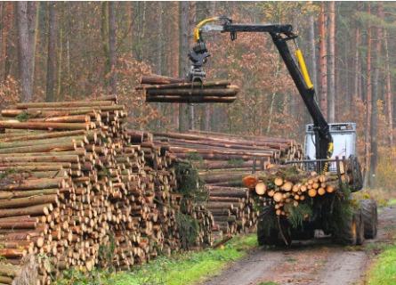 Logging Companies Cass County IL