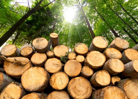 Sun shining through the trees onto a pile of tree logs
