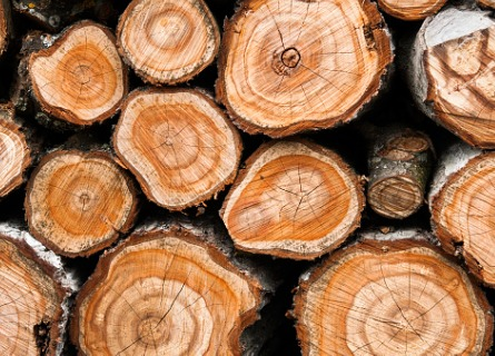 Licensed Timber Buyers Morgan County IL