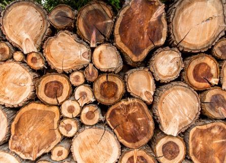 Logging Contractors Sangamon County IL