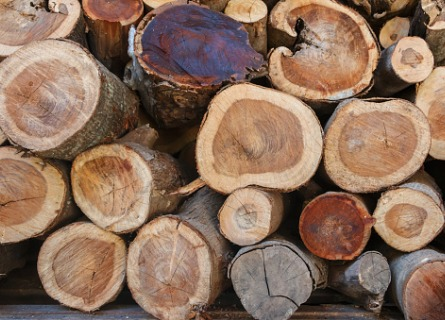 Licensed Timber Buyers Sangamon County IL